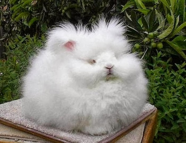 Image result for fluffy bunny